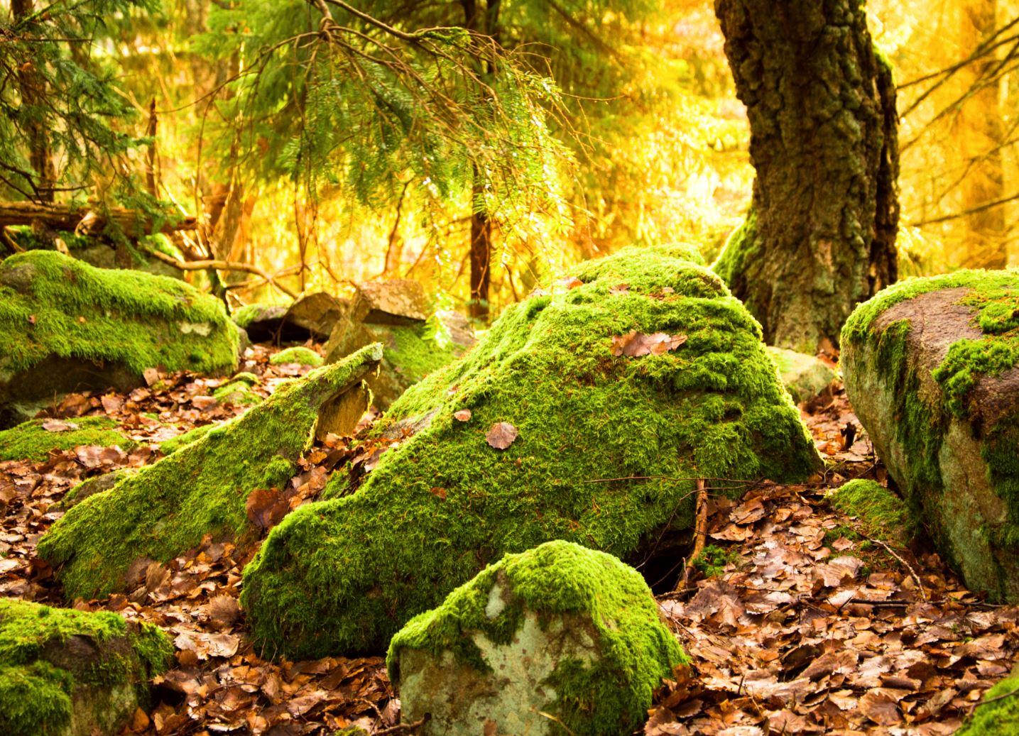 Hawkhill metsä forest